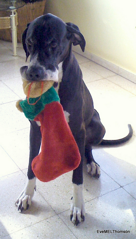 Stellar wants the teddy stocking all for herself!