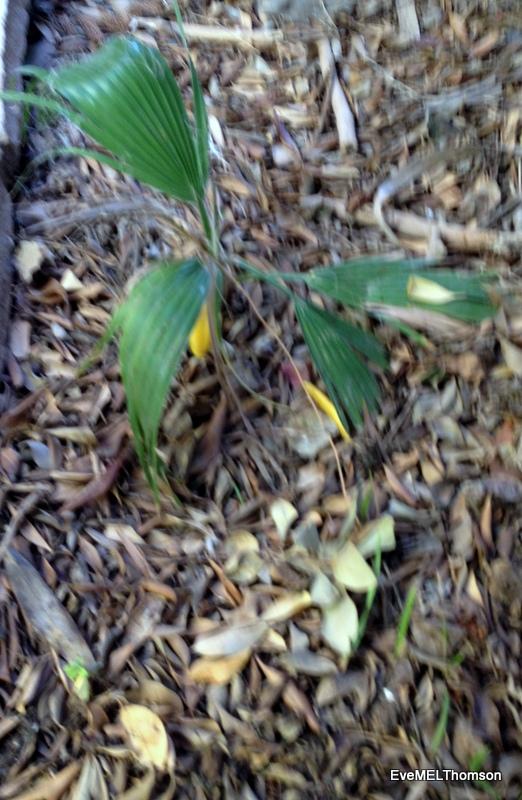 Seedlings-big and small
