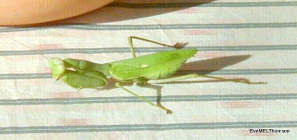 This one is sunbathing on a table outside.