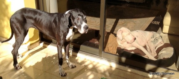Stellar stands in the sun beam outside while Venus catches the sun's rays inside.