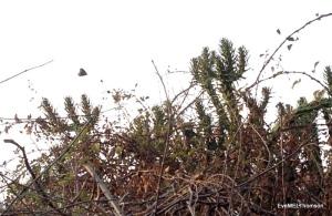 A mature cactus